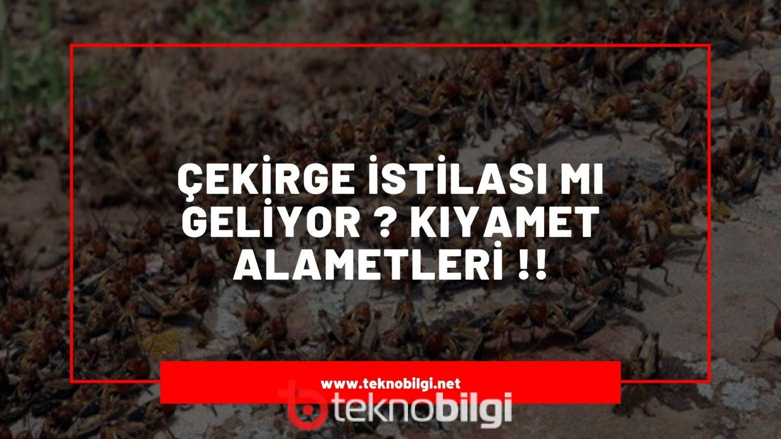 , Çekirge İstilası Türkiye'ye mi Geliyor ?