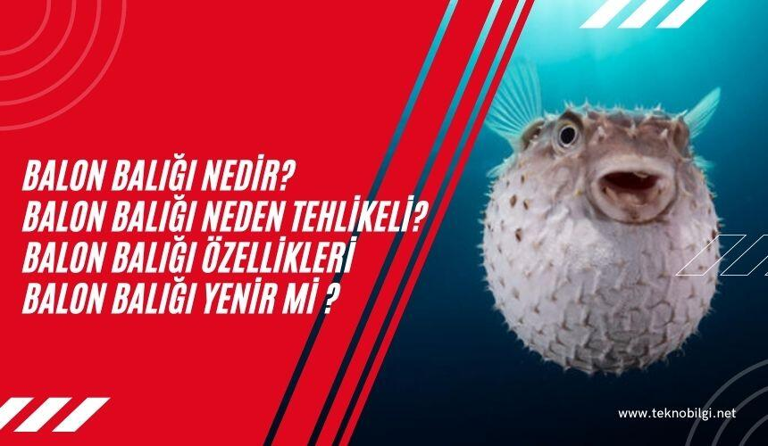 , Balon Balığı Nedir , Balon Balığı Neden Tehlikeli , Balon Balığı Özellikleri , Balon balığı Yenirmi